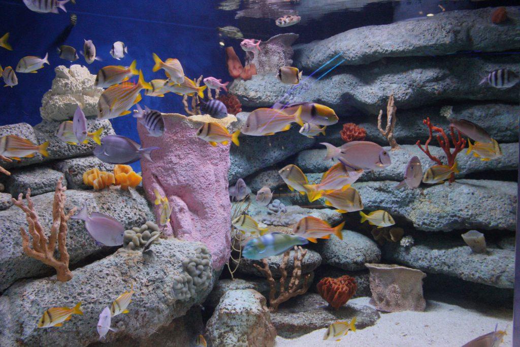Salt water reef life.