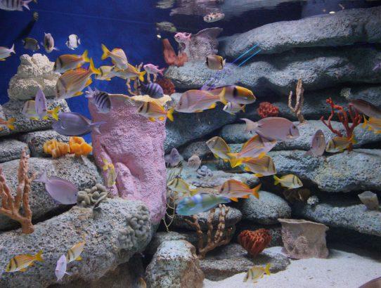 South Carolina Aquarium -- 2018