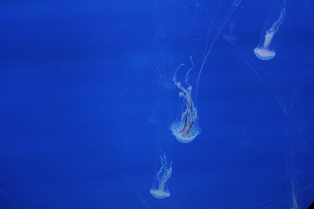 Some jelly fish -- salt water. They are in a special tank to make them particularly visible to folks.