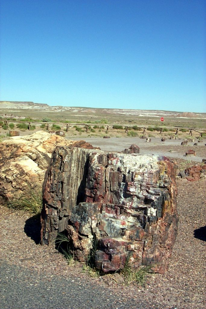 Here is a large log standing upright and showing clear origins as a tree. Behind, in the distance you can see the painted desert.