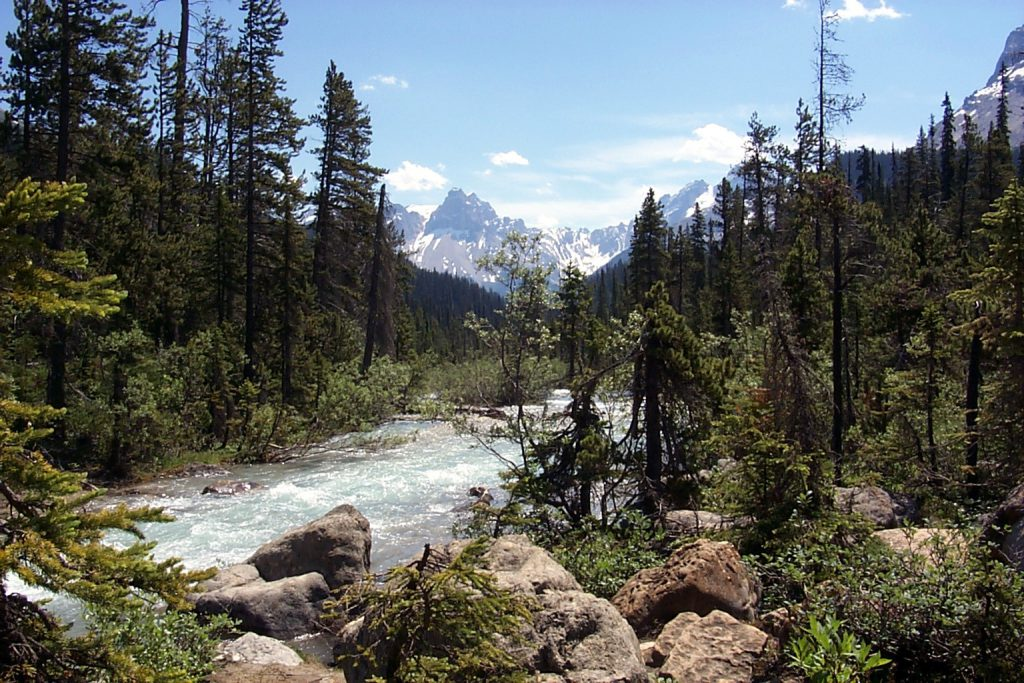 The Yoho Valley River just below the falls.