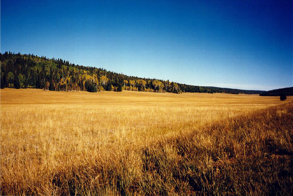 This photograph shows a large alpine meadow on the road to the North Rim just inside the Park boundary.