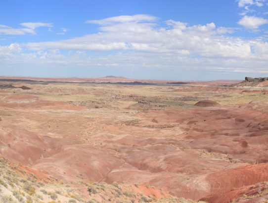 Petrified Forest 2017