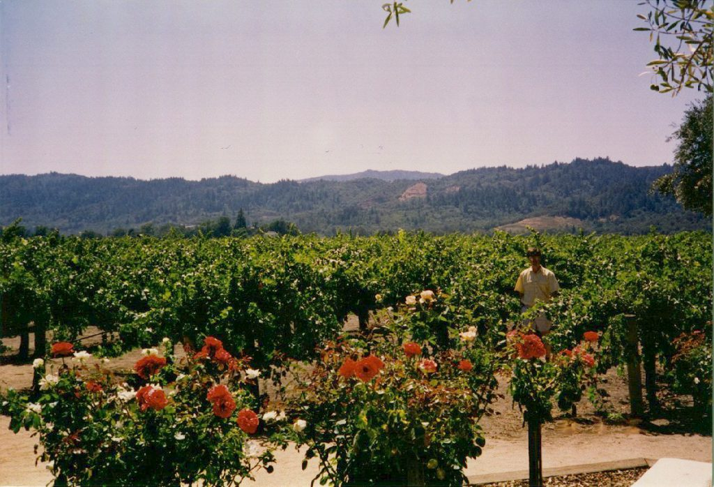 This photograph shows the vineyards just east of the Robert Mondavi Vineyard (Napa). In the distance are the hills separating Napa from Sonoma valleys.